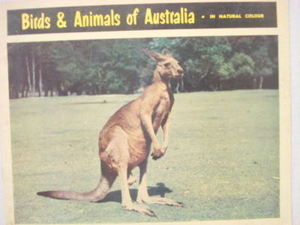 Birds & Animals of Australia 1960s Color Softcover Book